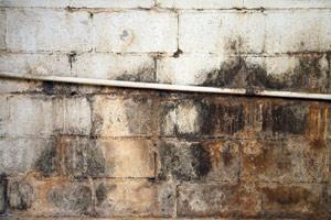 Residential Mold Restoration